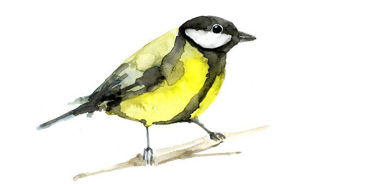 Co Za Ptak Robi Tak Książka Z Płytą Cd Księgarnia Bullerbyn