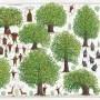 drzewa3